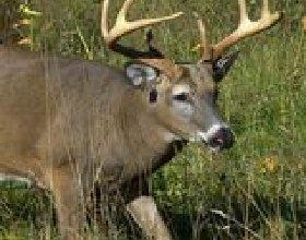 Como caçar veados no sudoeste de Ohio