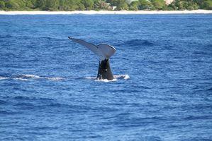 Cruzeiros para observação de baleias no porto de Boston