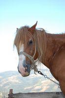 Atividades com Cavalos em Riverside, Califórnia