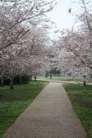 Lista de lugares para visitar em Washington DC