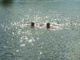 Como construir uma Plataforma Swim Pontão