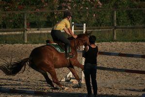 Andar a cavalo Campos de Férias para Crianças