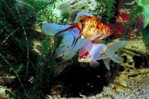 O Melhor Saltwater Homemade Peixe Atractivo