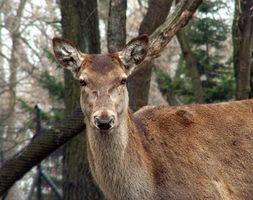 Caça dos cervos Datas em Georgia