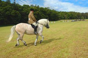 Packing List Evento Equestre