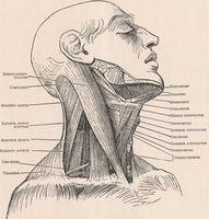 Como evitar Overextending o pescoço durante o treinamento de força