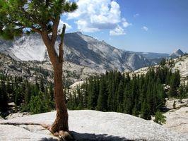 ATV Trilhas & Acampamento em Yosemite
