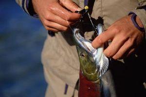Como criar sua própria Atractivo peixe com alho em pó