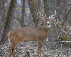 Texas Deer Hunting Temporada