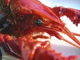 Quanto tempo pode lagostas ficar de fora da água antes que eles são ruins para comer?