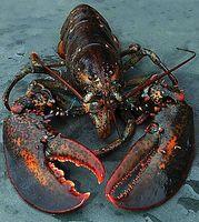 Como cozinhar lagosta Tails no Forno