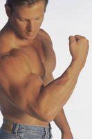 Exercícios diferentes para diferentes partes do Bíceps