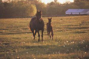 Atividades para a família em Lexington, Kentucky