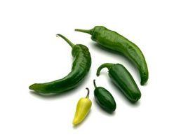 Que tipos de alimentos para cozinhar com um Jalapeno Pepper?