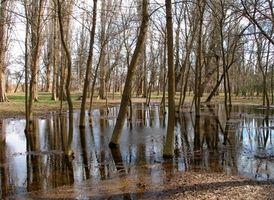 Como Purificar Muddy Water