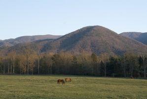 Isolada Mountain Cabins em Smoky Mountains