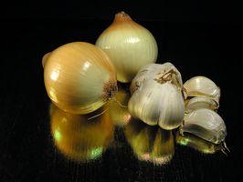 Allium Foods
