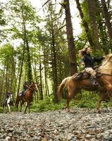 Como configurar Competitivos Cursos Trail Ride