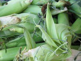 Produção de xarope de milho