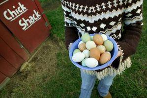 Como faço para obter o cheiro Off Our Eggs Farm?