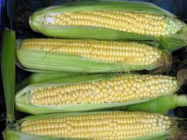 Como congelar milho em sacos de congelação