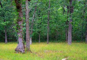 Locais públicos para a caça dos cervos em West Tennessee