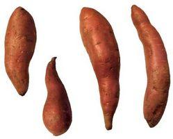 O processo de produção de açúcar a partir de batatas