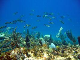 Reef Pesca em Belize