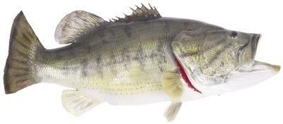 Dicas sobre Catching Prespawning Baixo