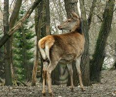 Como fazer caseiro cervos Cortinas para Crianças