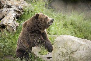 Presentes para caçadores de urso