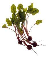 Sobre o vegetal beterraba