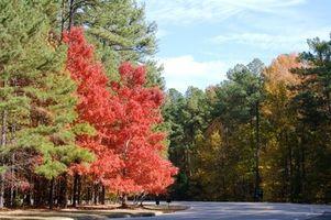 Carolina do Norte RV Camping