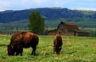 RV Parques nas proximidades I-80 em Wyoming
