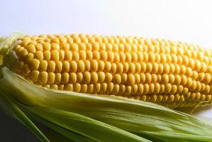Como aquecer congelado milho em espiga