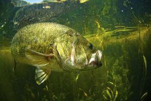 Melhores Parques estaduais no Texas para Pesca