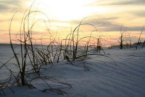 Parques RV Trailer de frente para o mar na Carolina do Sul