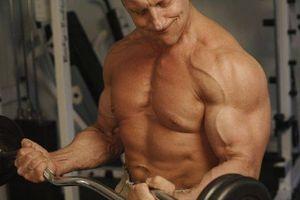 Como construir uma Diet Muscle