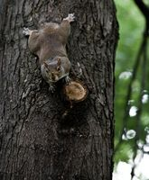 Como fazer um Snare Squirrel in the Wild