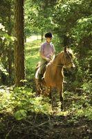 Como andar sem saltar sobre o cavalo