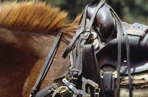 Como restaurar um Brooks Saddle