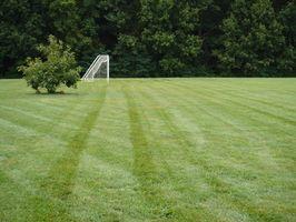 Dicas que uma Winger poderia usar em um jogo de futebol