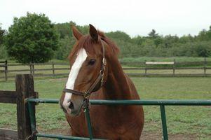 Como Treinar um cavalo de dois anos