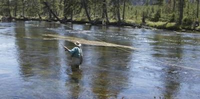 Como amarrar um Fly Freshwater Camarão