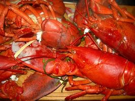 Lobster Restaurants em Tampa Bay, Florida