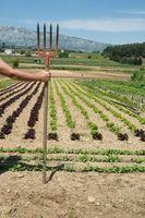 Fatores que Afetam geográficas Hábitos Alimentares