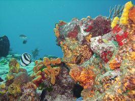 Cozumel Snorkeling Trips