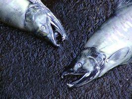 Carta Pesca No estado de Washington
