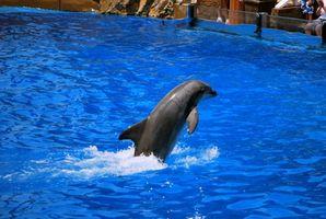 Dicas Visitante: Sea World San Diego