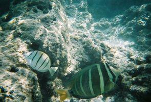 Os melhores lugares para Shore Pesca em Oahu